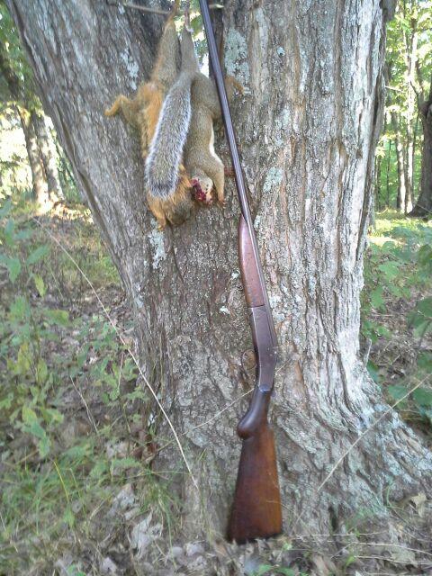 410-squirrels-jpeg.44215